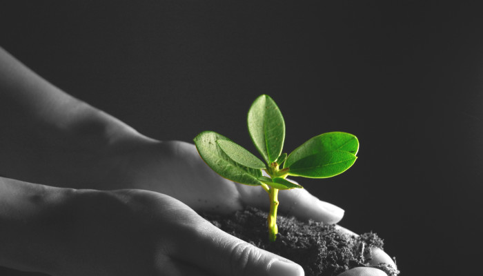 Hand holding a plant (partly in black and white)